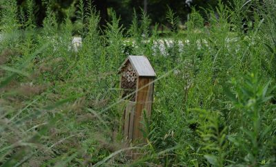 Green RFP Program Bee Hotel