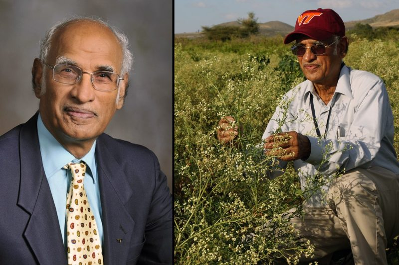 Headshot of researcher on left and in a field of weeds on right