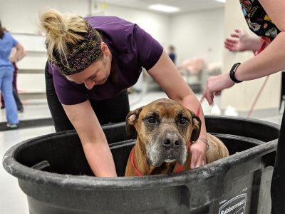 Dog wash at Virginia-Maryland College of Veterinary Medicine