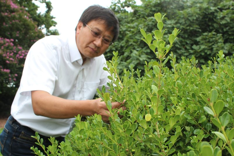 Chuanxue Hong will conduct research on how to prevent disease in boxwoods. This research is one of five USDA NIFA grants with which Virginia Tech is involved.