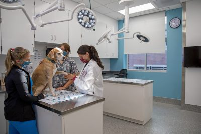 Dr. Brittany Ciepluch, assistant professor of surgical oncology, and oncology technicians examine a patient at the Animal Cancer Care and Research Center