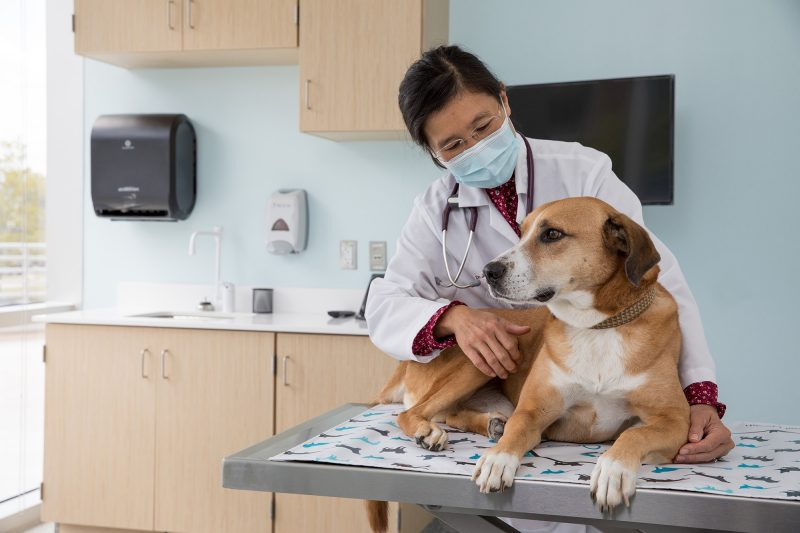 Animal Cancer Care and Research Center