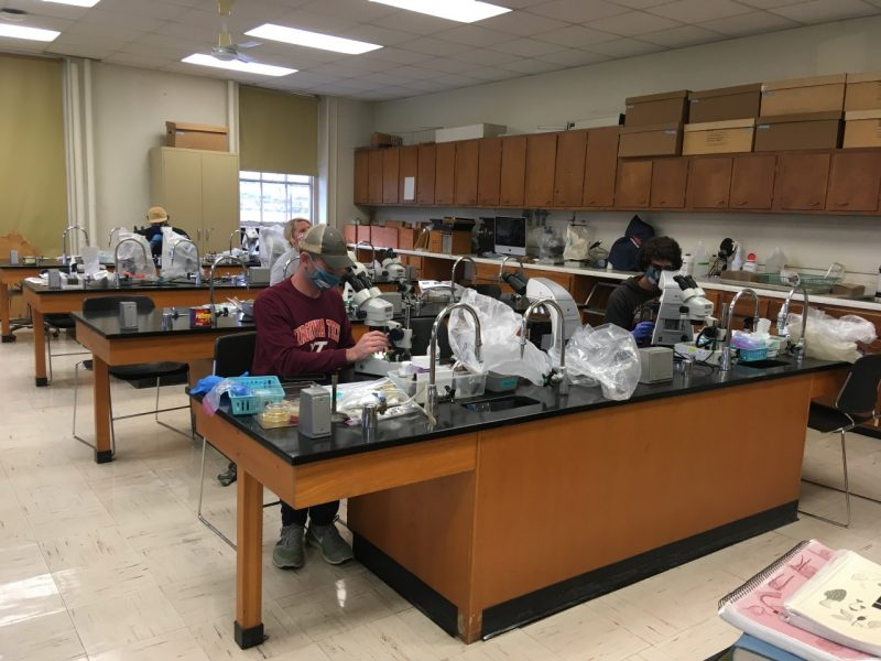 Students use microscopes to analyze plant specimens during the fall 2020 semester.