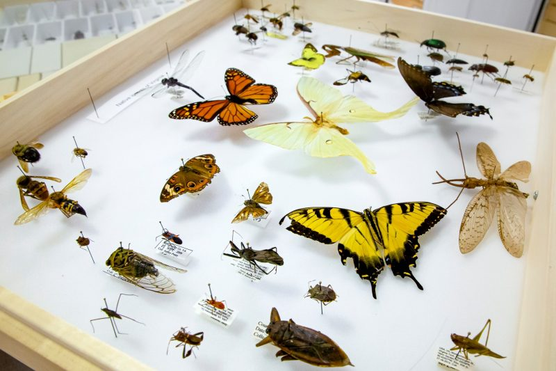 A sampling of specimens from the Virginia Tech Insect Collection. Photo by Trevor Finney.
