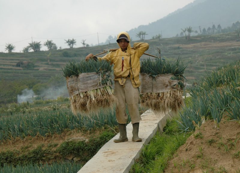 farmer in the Philippines