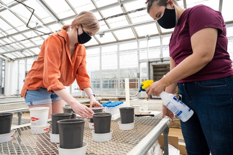Clare Tallamy, left, and Kathlynn Lewis, right, members of the Virginia Tech Soil Judging Team, work on a NASA project attempting to grow vegetables in lunar soil simulant. Photo credit: Ryan Young
